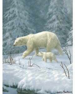 "The Northwest Company Hautman Bros- Polar Bear Hautman Bros. 60""x 80"" Super Plush Throw"